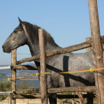 Equitazione_bonsenso_10