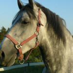Equitazione_bonsenso_11