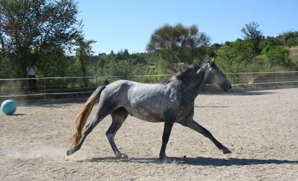 Equitazione_bonsenso_12