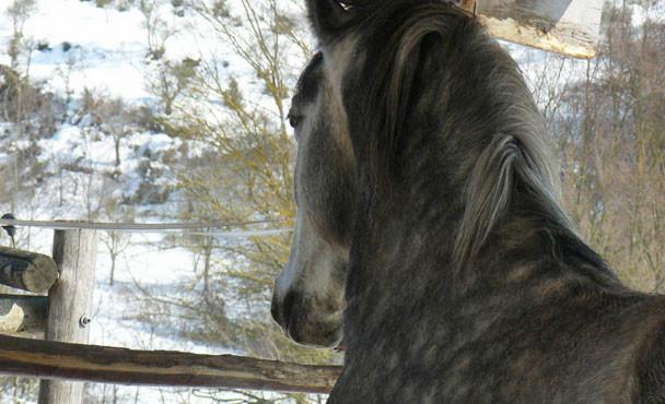 Equitazione_bonsenso_13