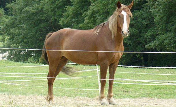 Equitazione_bonsenso_14