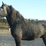 Equitazione_bonsenso_15
