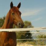 Equitazione_bonsenso_16