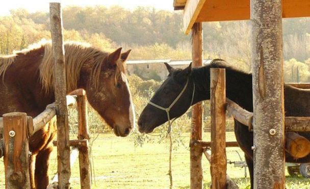 Equitazione_bonsenso_17