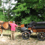 Equitazione_bonsenso_4
