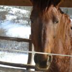 Equitazione_bonsenso_6