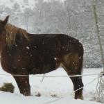 Equitazione_bonsenso_7