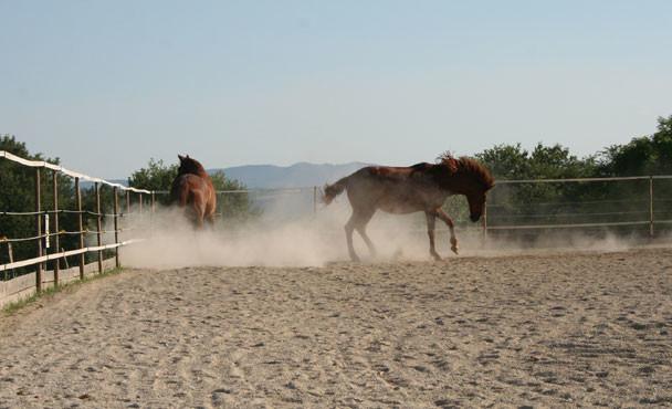 Equitazione_bonsenso_8