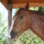 Equitazione_bonsenso_9