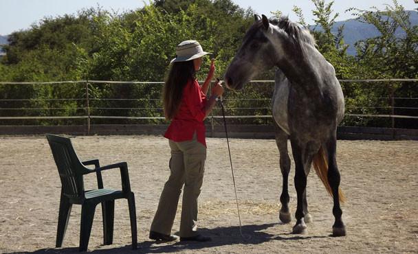 Equitazione_corsi_1
