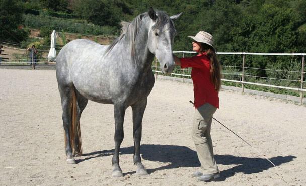 Equitazione_corsi_10