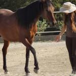 Equitazione_corsi_11