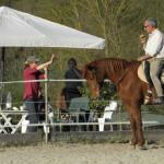 Equitazione_corsi_15