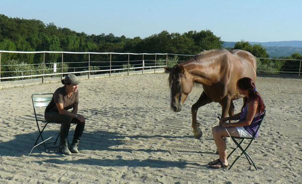 Equitazione_corsi_16