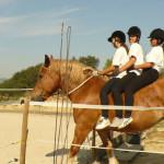 Equitazione_corsi_17