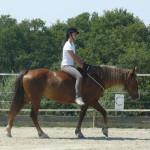 Equitazione_corsi_18