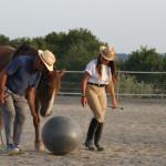 Equitazione_corsi_2