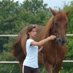 Equitazione_corsi_3