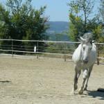 Equitazione_corsi_5