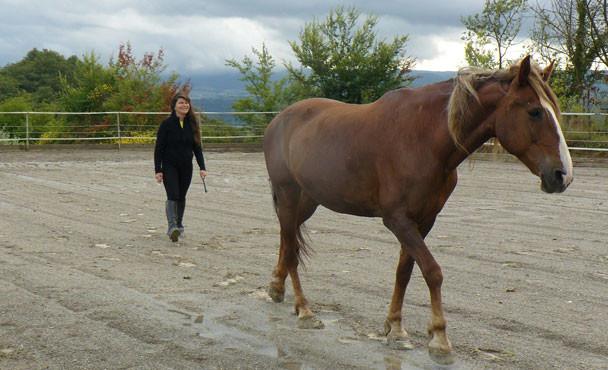 Equitazione_corsi_6