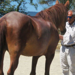 Equitazione_corsi_9