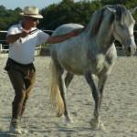 addestramento_cavalli_2