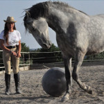 addestramento_cavalli_7