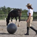 addestramento_cavalli_8
